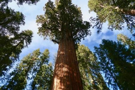 Mise à jour de la liste des arbres et haies remarquables existante
