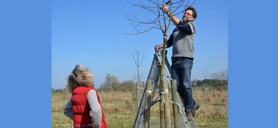 Yes We Plant : le gouvernement wallon soutient la plantation d'arbres et de haies