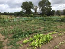 """Ça pousse au jardin communautaire ! Bravo aux jardiniers pour le bel entretien de leur parcelle et des abords. """""""